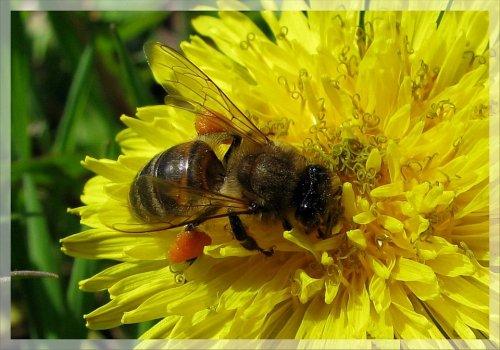 Виды мёда и выбор лучшего мёда