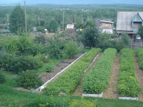 Замечательный огородишко Игоря Лядова.