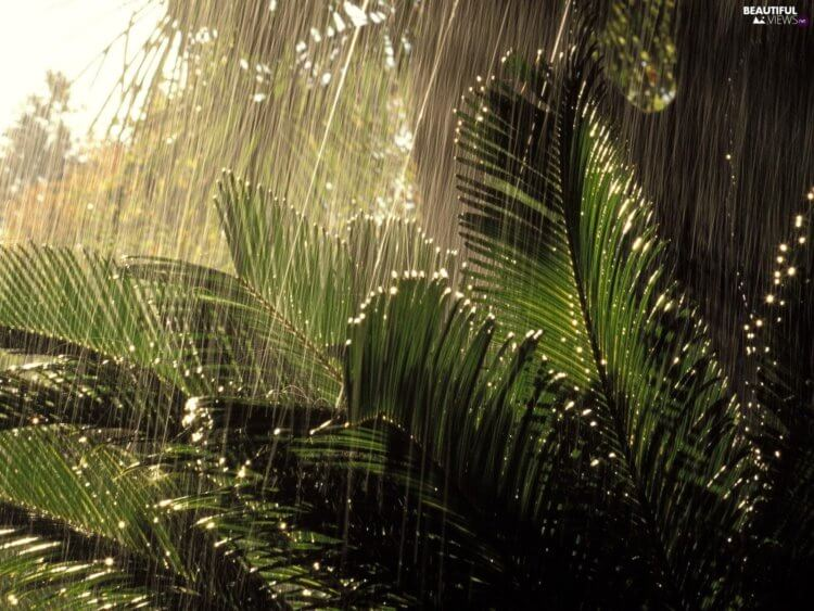 plants-jungle-rain-rainy-750x563