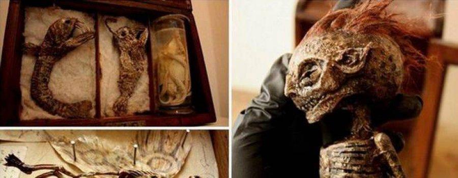 Загадочная коллекция Томаса Мерлина