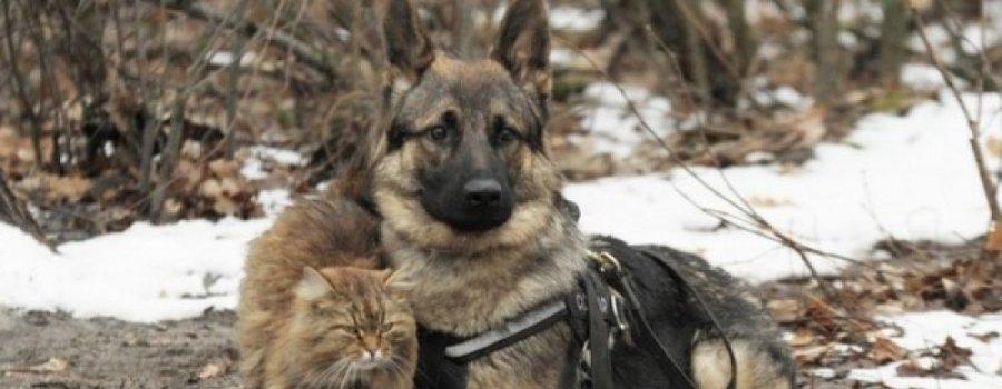 """Кот, выросший среди псов, работает """"провокатором"""" в центре подготовки служебных собак"""