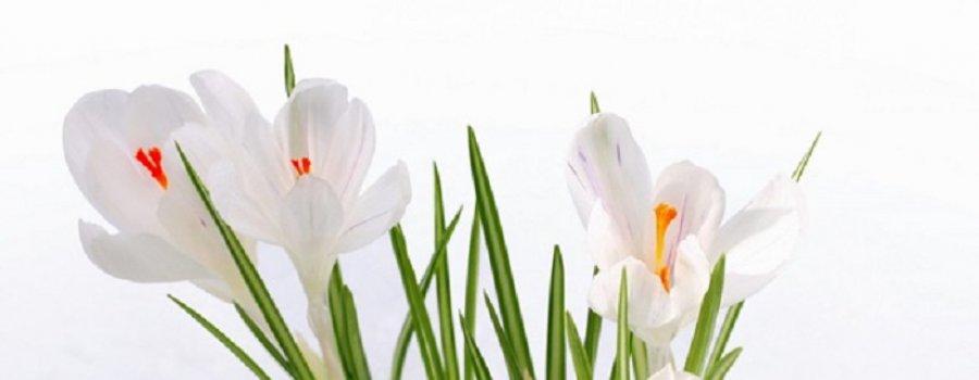 Поздравление милых Дам с праздником весны
