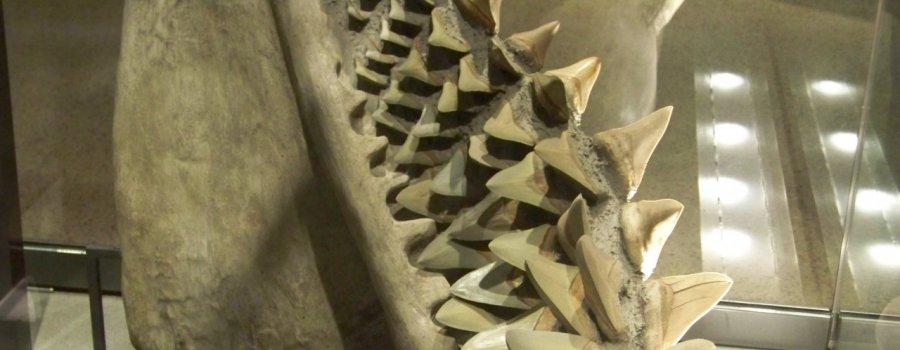 Ужас древних морей
