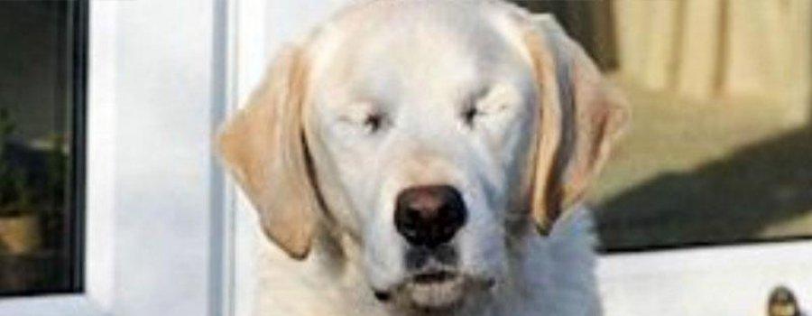 Однажды пёс-поводырь ослеп… Только посмотри, что сделал с ним хозяин!