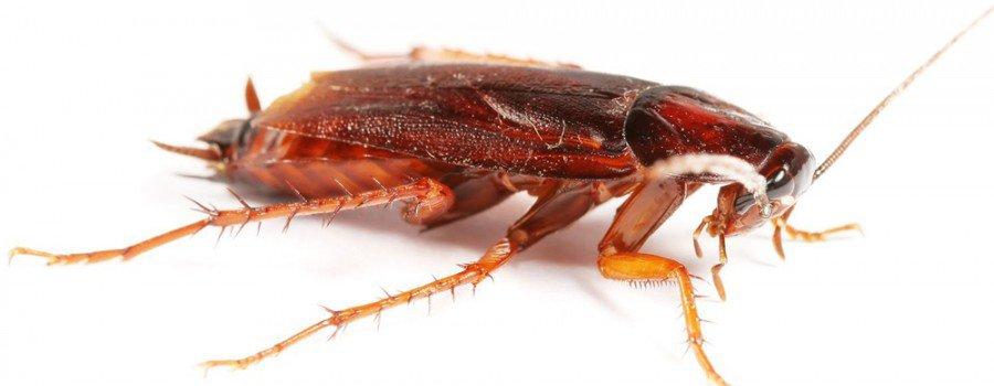 Куда делись тараканы из российских квартир?